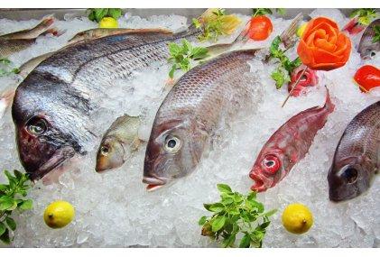 Рыба и морепродукты (35)